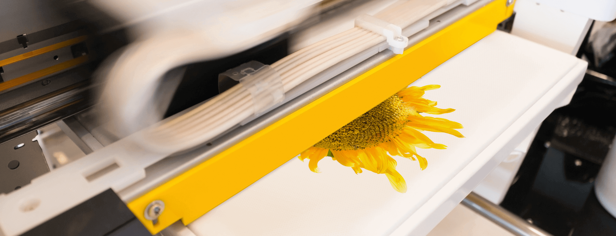 Using digital textile printing to print sunflower on a cotton material